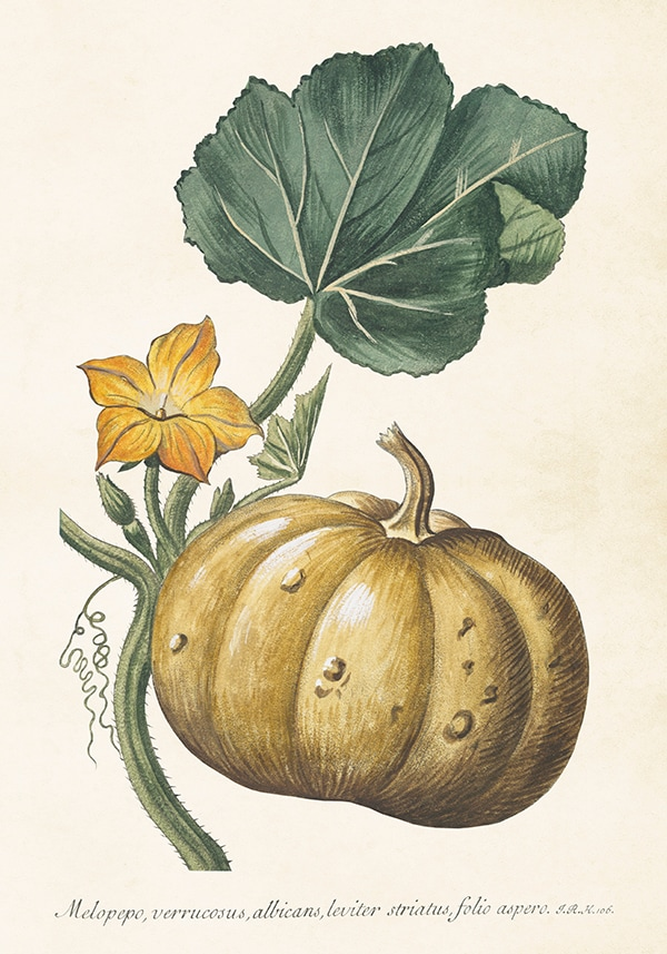 Poster Pumpa