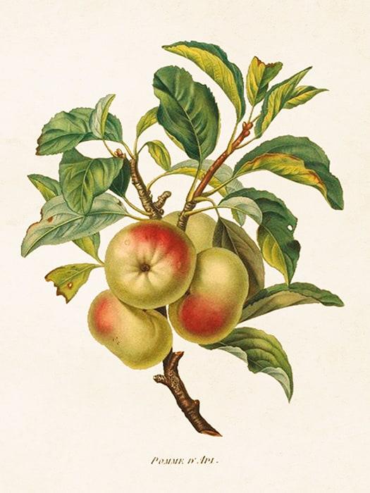 Poster Äpplen