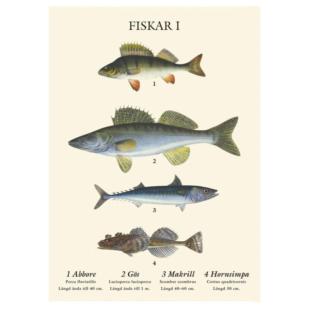 Vykort Fiskar