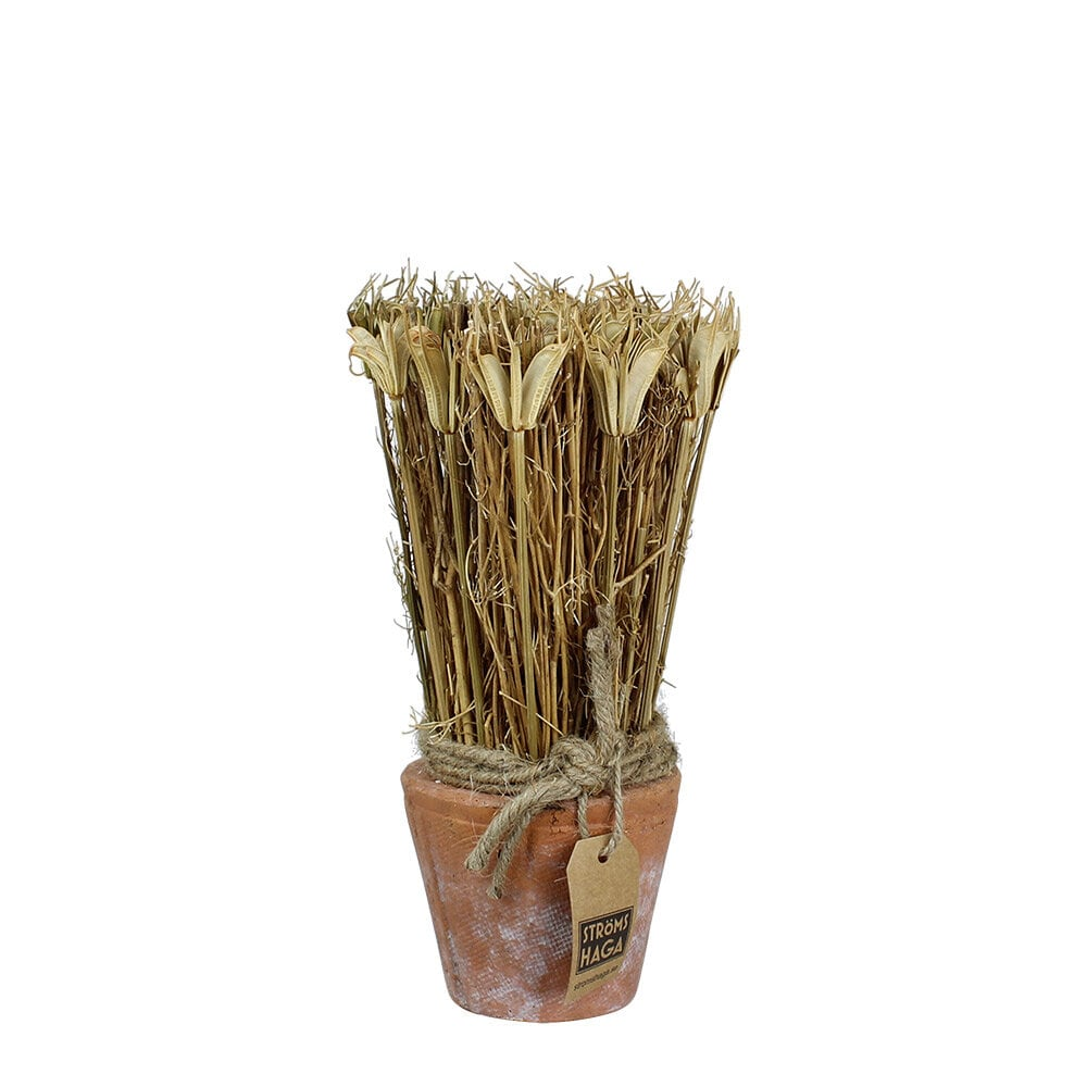 Harvest in Pot Black Caraway Small