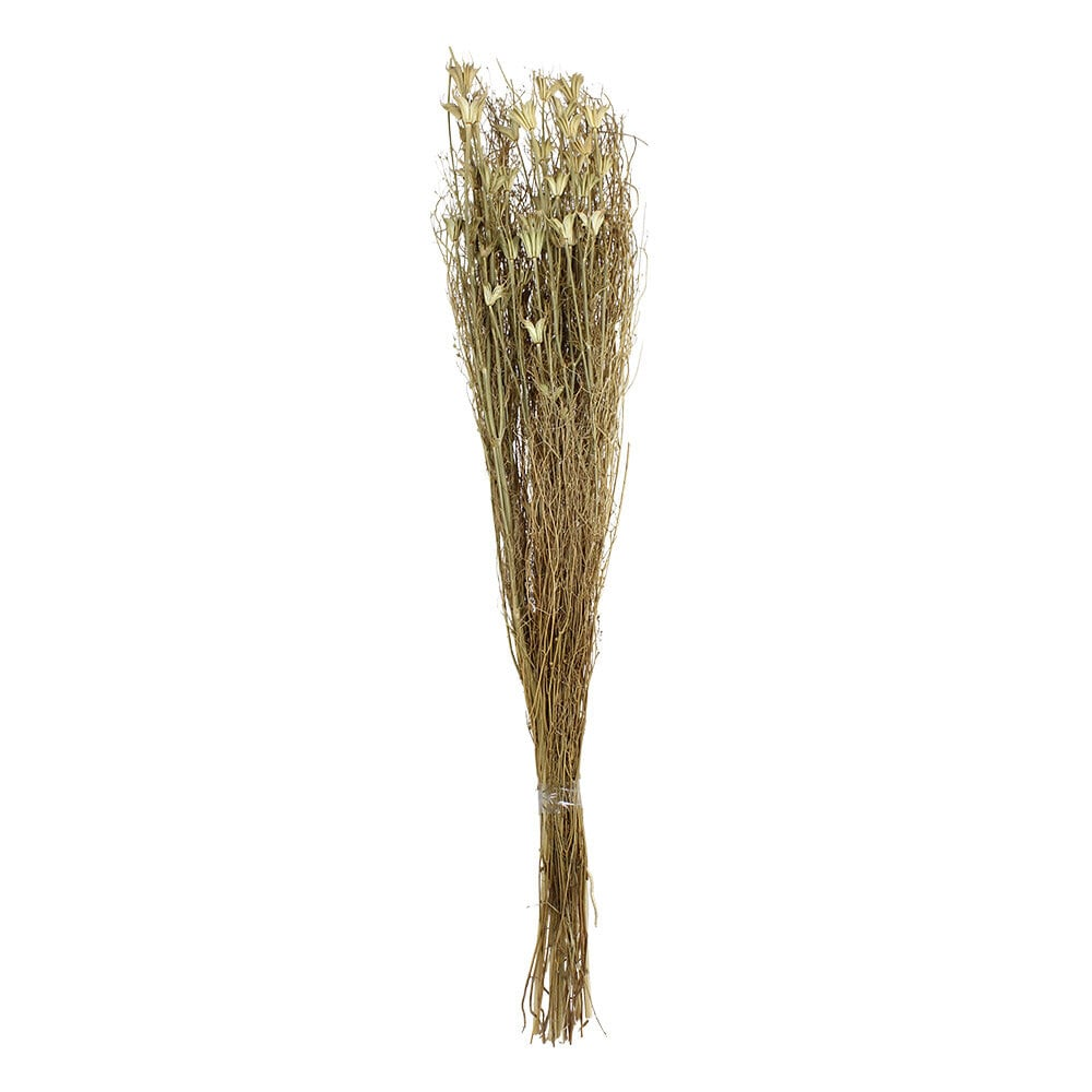 Dried Bouquet Black Caraway