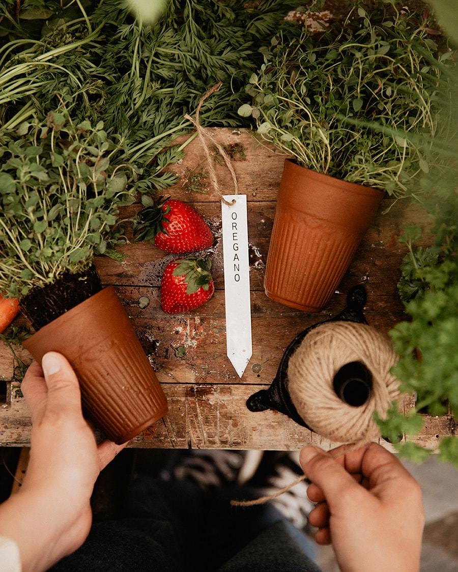 Planter Stick Oregano