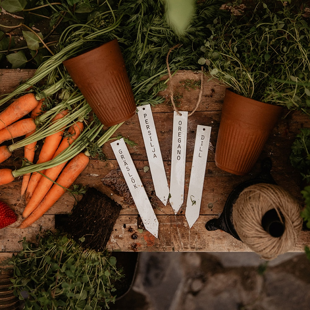 Planter Stick Dill