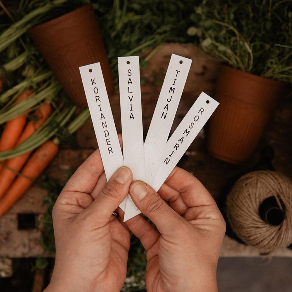 Planter Stick Salvia