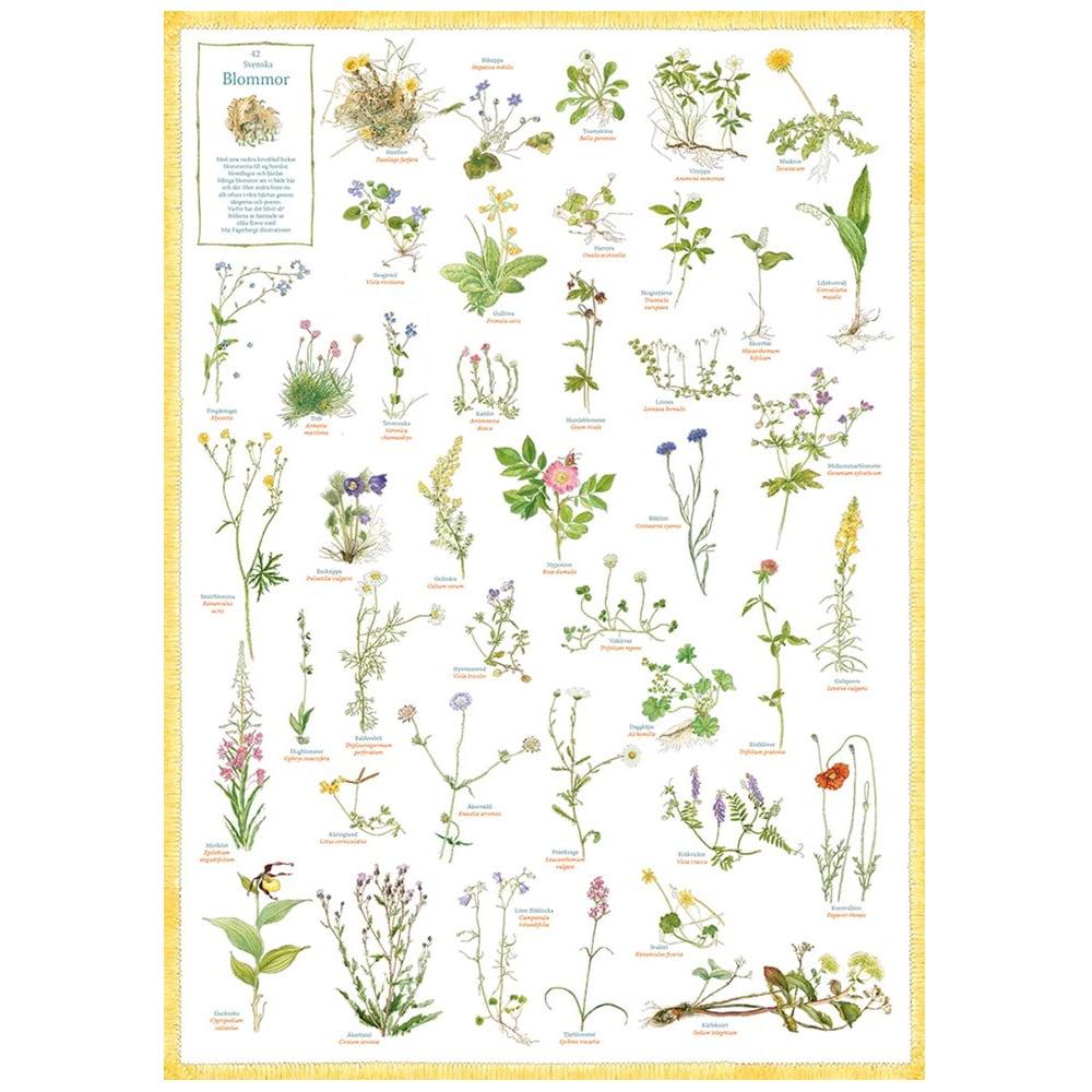 Poster Svenska Blommor