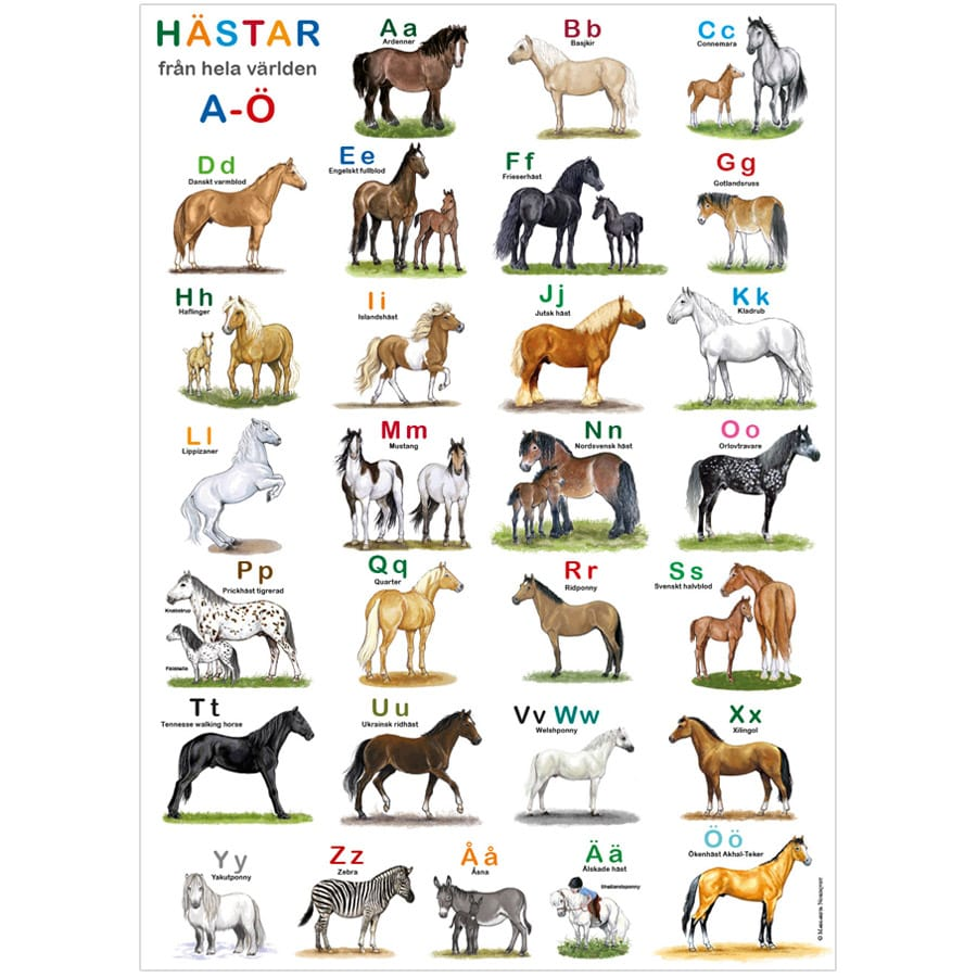 Poster ABC Hästar