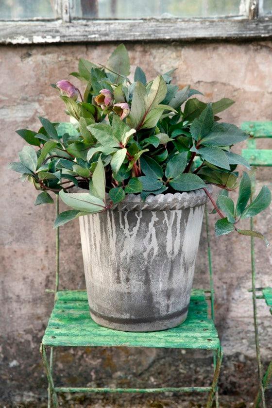 Pot Emilia Grey