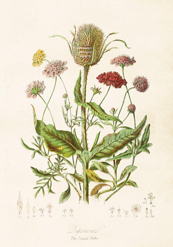 Poster Blomsteräng